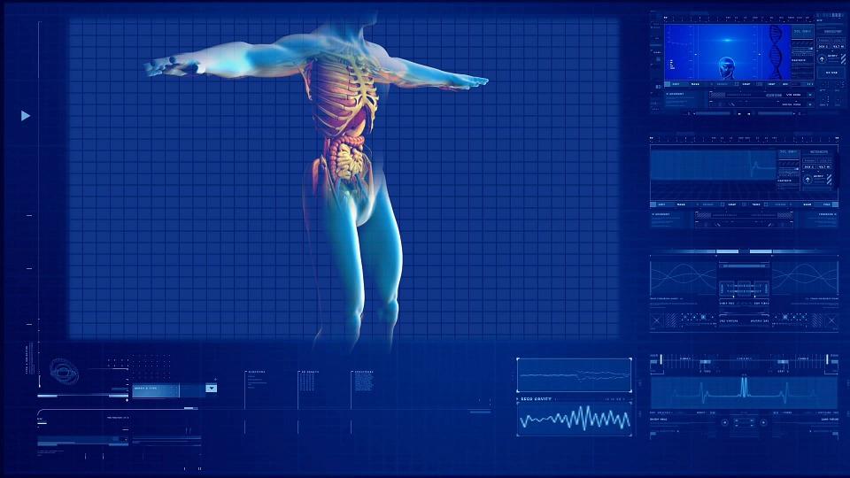 Mengenal Pankreas Manusia Beserta Fungsinya