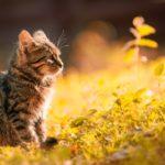 Tak Perlu Bingung, Yuk Simak Tahapan Vaksin Kucing yang Perlu Diketahui
