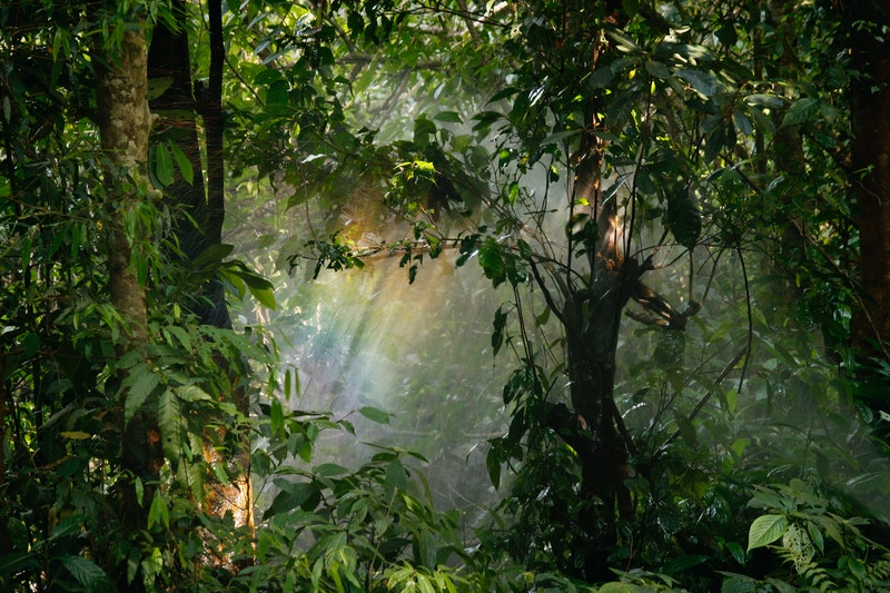 Hutan produksi adalah