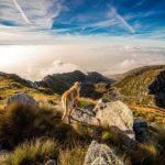 Gunung Parang, Pendakian Jalur Ferrata Pertama di Indonesia