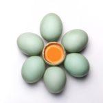 Khasiat Kuning Telur Bebek Yang Wajib Diketahui