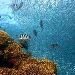 Ikan Yang Hidup Di Air Es Sampai Di Bawah Titik 0 Derajat